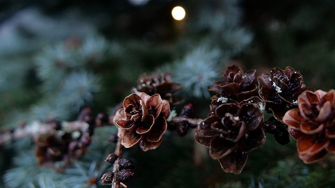Texo toivottaa lämmintä joulua ja hyvää uutta vuotta!